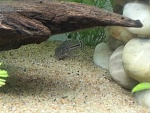 Fish Pics