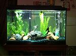 My aquariums