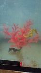 My seahorses