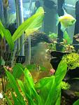 Arod fish tank