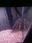 Freshwater 55