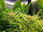 Plants in my tank