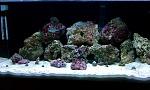 35gal reef