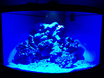Before fish and coral