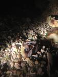 Feeding coral