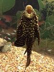 My fish :)