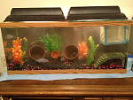 My aquariums and fish.