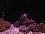 Saltwater/reef