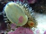 My 18 Gallon Mini Reef
