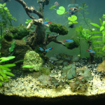 29g Bowfront community