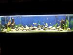 My wife's tanks