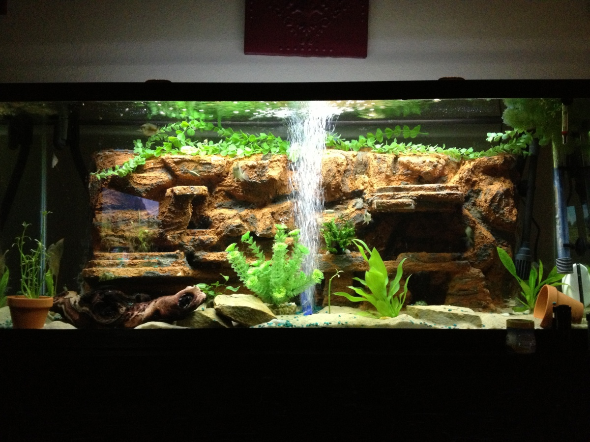 I have my sand fall up running but page 4 aquarium for Rocks for fish tank