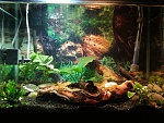 My 20 Gal Freshwater Tank