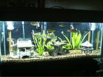 My SA Cichlid Tank
