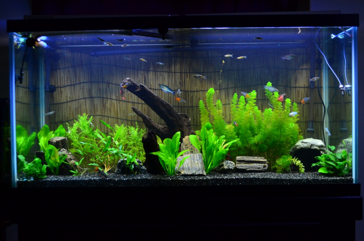 90 gallon background aquarium advice aquarium forum for 90 gallon fish tank stand