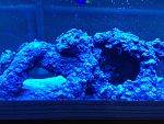 55g fish and reef tank