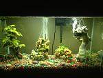 Cichlid tank