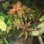 160905b Red Stem Plants
