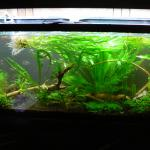 55g rescape during 10 15 2013
