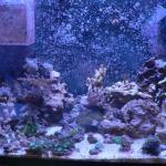 20g reef 11 4 2013