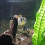 Brand new pair spawning for me
