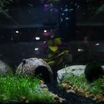 Photos of My Tanks