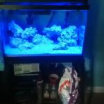 My saltwater