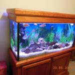 My original cichlid tank...bought two more recently