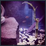 28gal bow-front freshwater trop community
