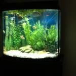 My first aquarium the day the last two cories arrived.