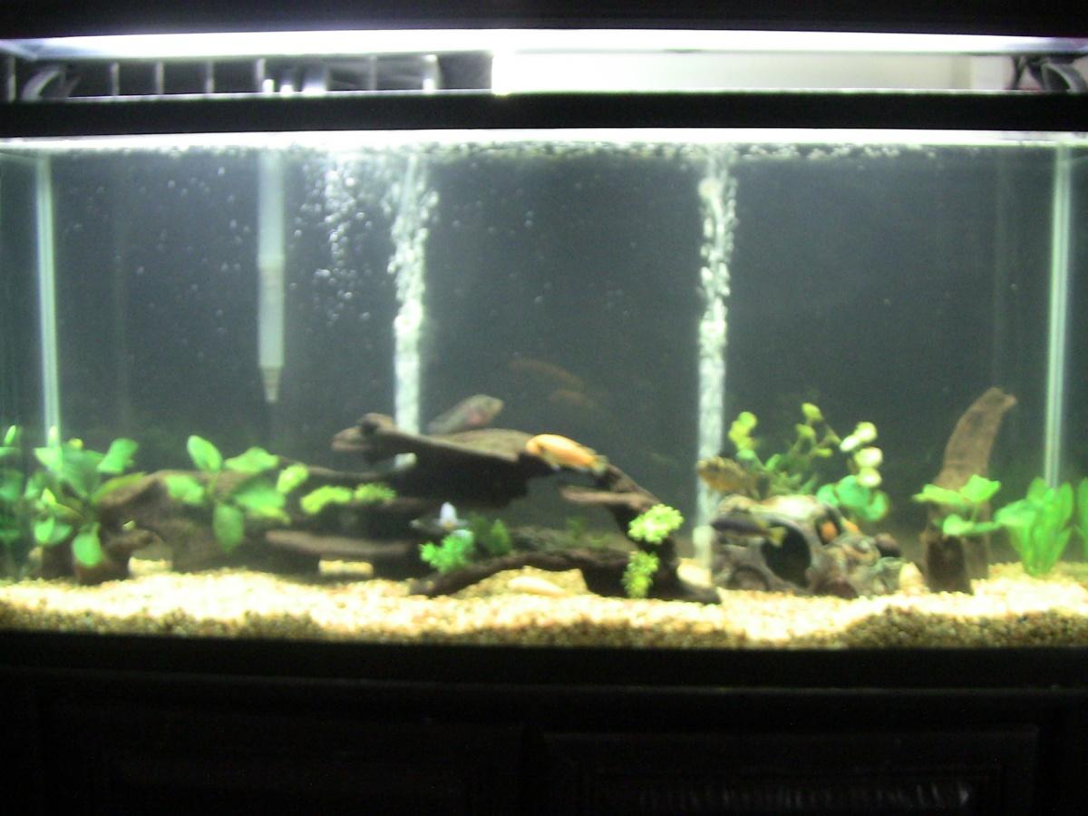 Help Growing Plants In My Tank Aquarium Advice