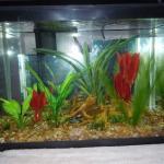 Progression of my Aquarium Hobby!