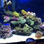 20 gallon Reef Tank