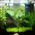 5 gallon dorm room aquarium