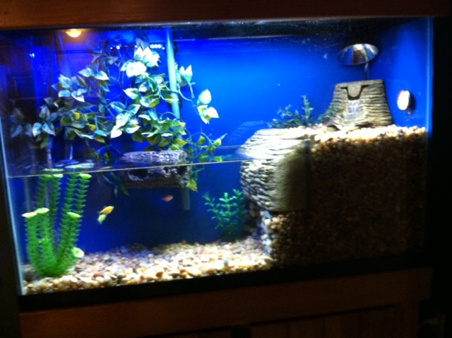 ... reuse a turtle tank for fish can a fish tank be reused for a turtle