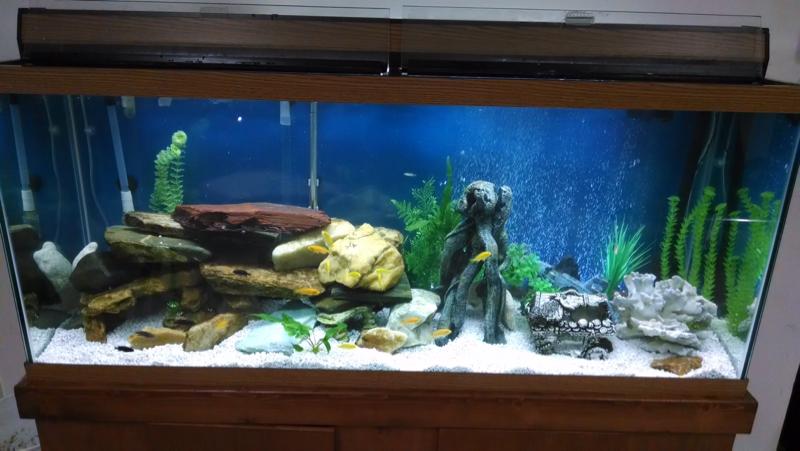 Aquarium Advice - Aquarium Forum Community - Ian14s Album: 120 gallon ...