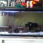 My Tanks