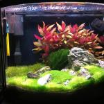 16 gallon Bow Front
