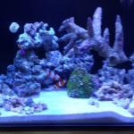 My Saltwater Tanks