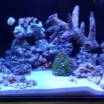 My Saltwater Tanks