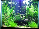 Aquascaping Concentration