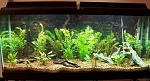 This is my 55g tank that will soon be home to a school of bleeding heart tetras, some cory cats, and angel fish.  Still setting it up!