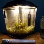 My Aquarium 2-2014