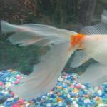 Pics of Nemo's tail