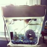 My Aquafarm