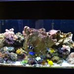 90G Mixed Reef