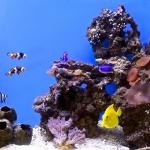 My Saltwater aquarium