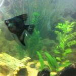 My friendly fish/ frog tanks