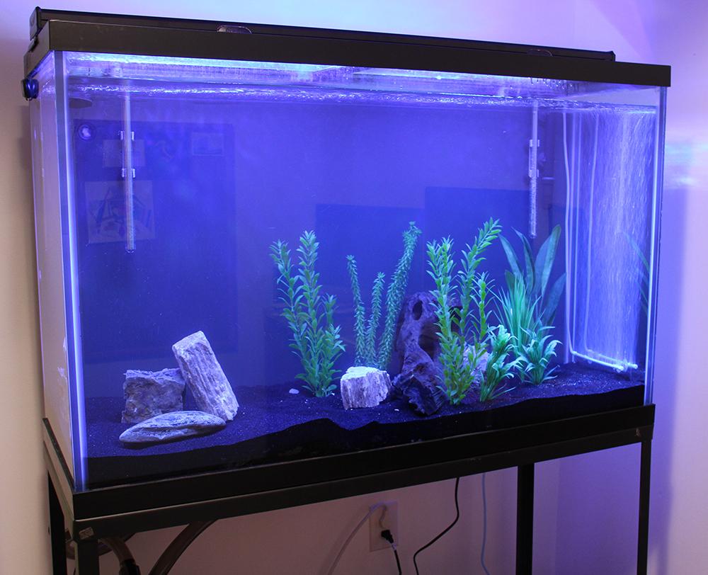 Cichlids or community fish aquarium advice aquarium for Community fish tank