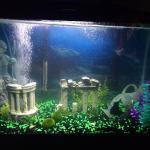 29 gallon Freshwater Community Tank